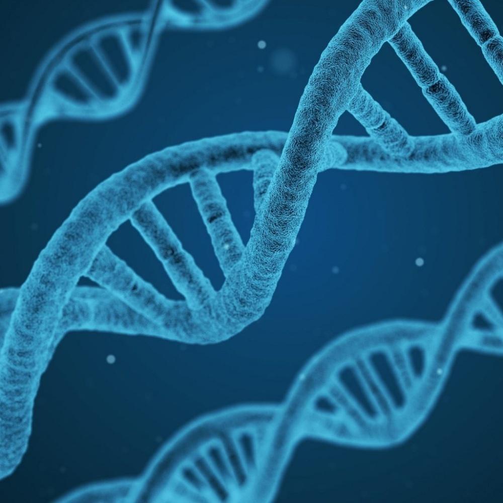 #878 - Können sich Gene verändern? show art