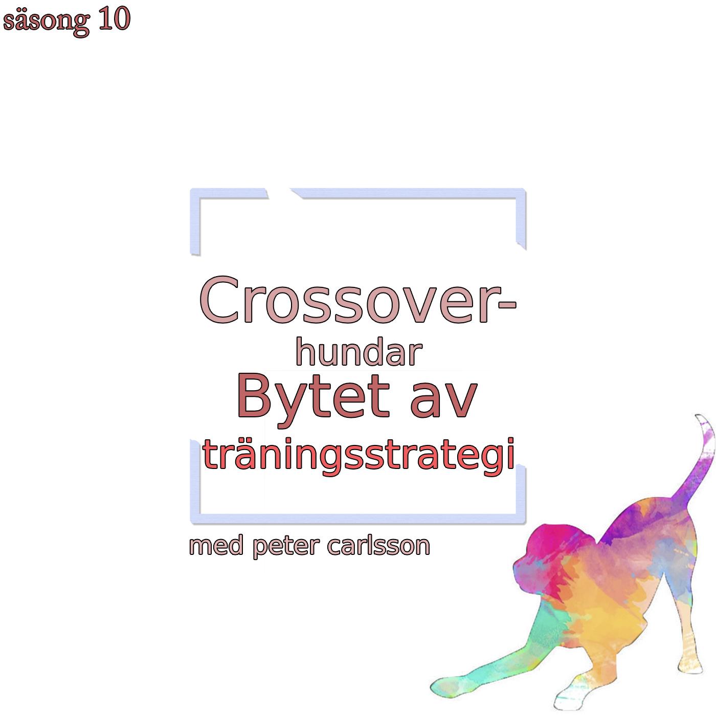 Crossover-hundar - Bytet av träningsstrategi