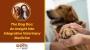 Artwork for The Dog Doc: An Insight Into Integrative Veterinary Medicine