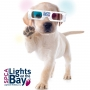 Artwork for The Magic of Lights on the Bay by the SPCA of Anne Arundel County (December 2019)
