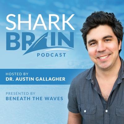 Shark Brain show image