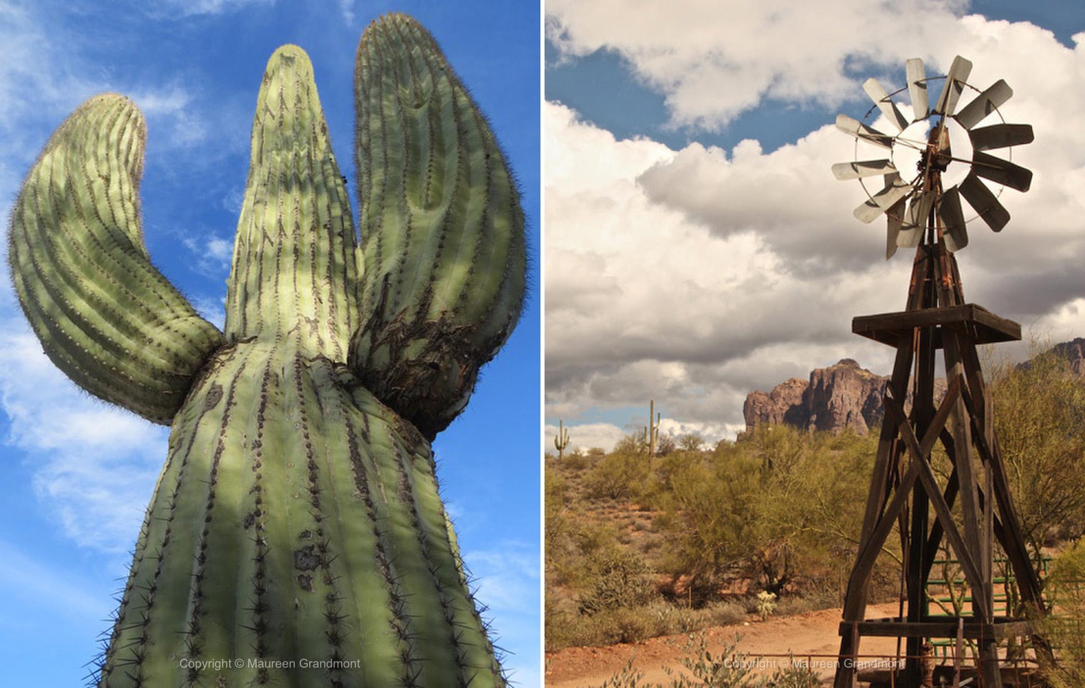 saguaro windmill