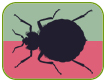 Artwork for Bed Bugs: Have Bite, Will Travel