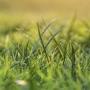 Artwork for Tozan's No Grass