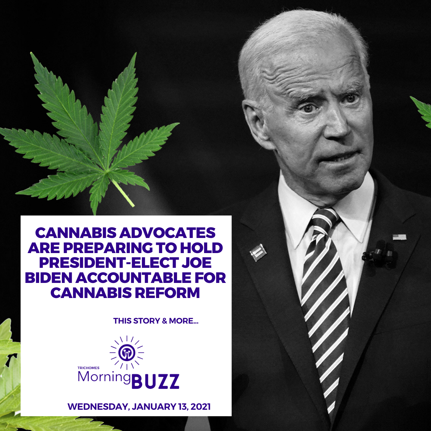 Cannabis Advocates are Preparing to Hold President-elect Joe Biden Accountable for Cannabis Reform  - TRICHOMES Morning Buzz show art