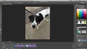 How to Create an Animated GIF from a Video and Stills in Photoshop