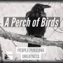 Artwork for 18 - A Perch of Birds - Sergio Gutierrez - Artist - Musician