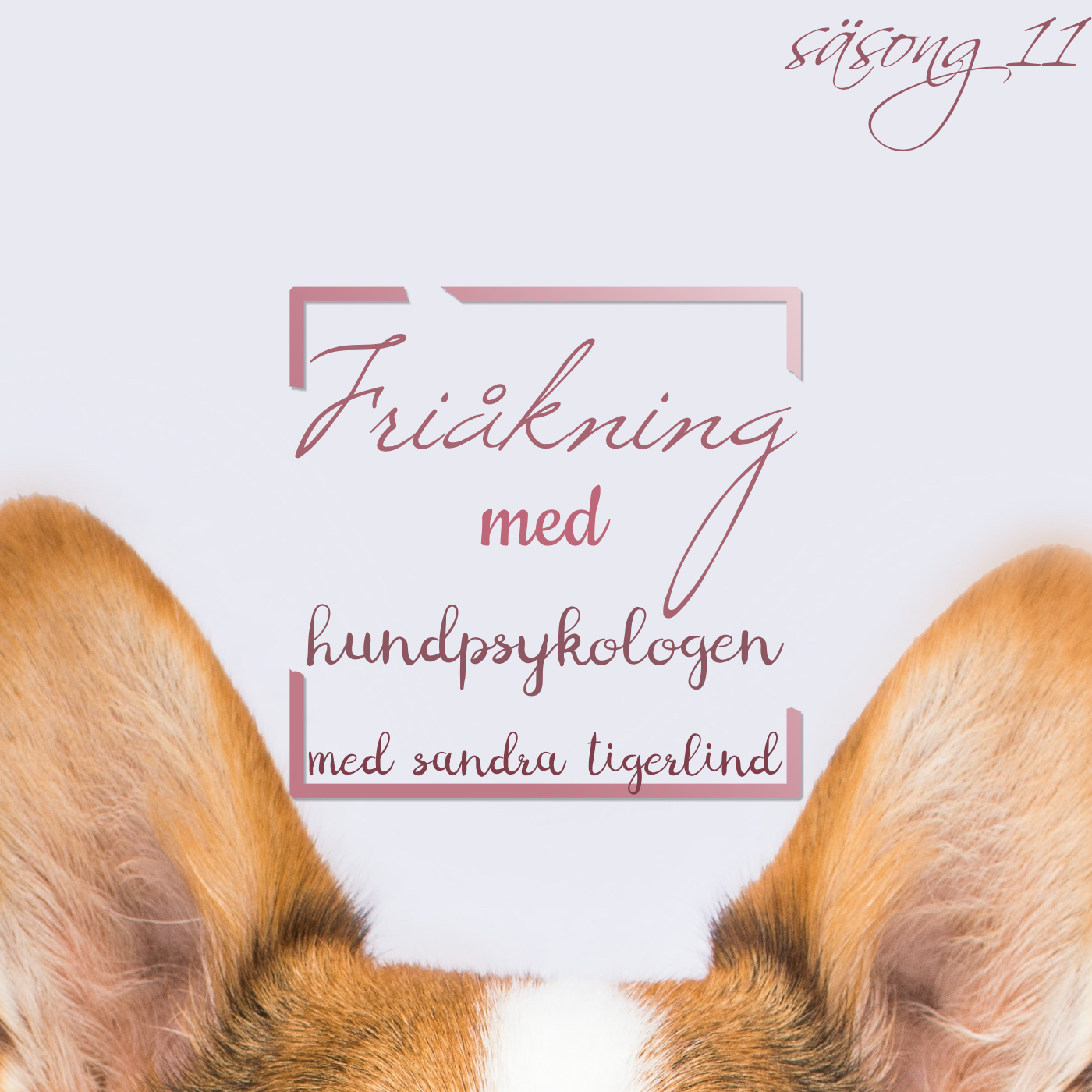 Friåkning med hundpsykologen