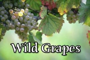 FBP 473 - Wild Grapes