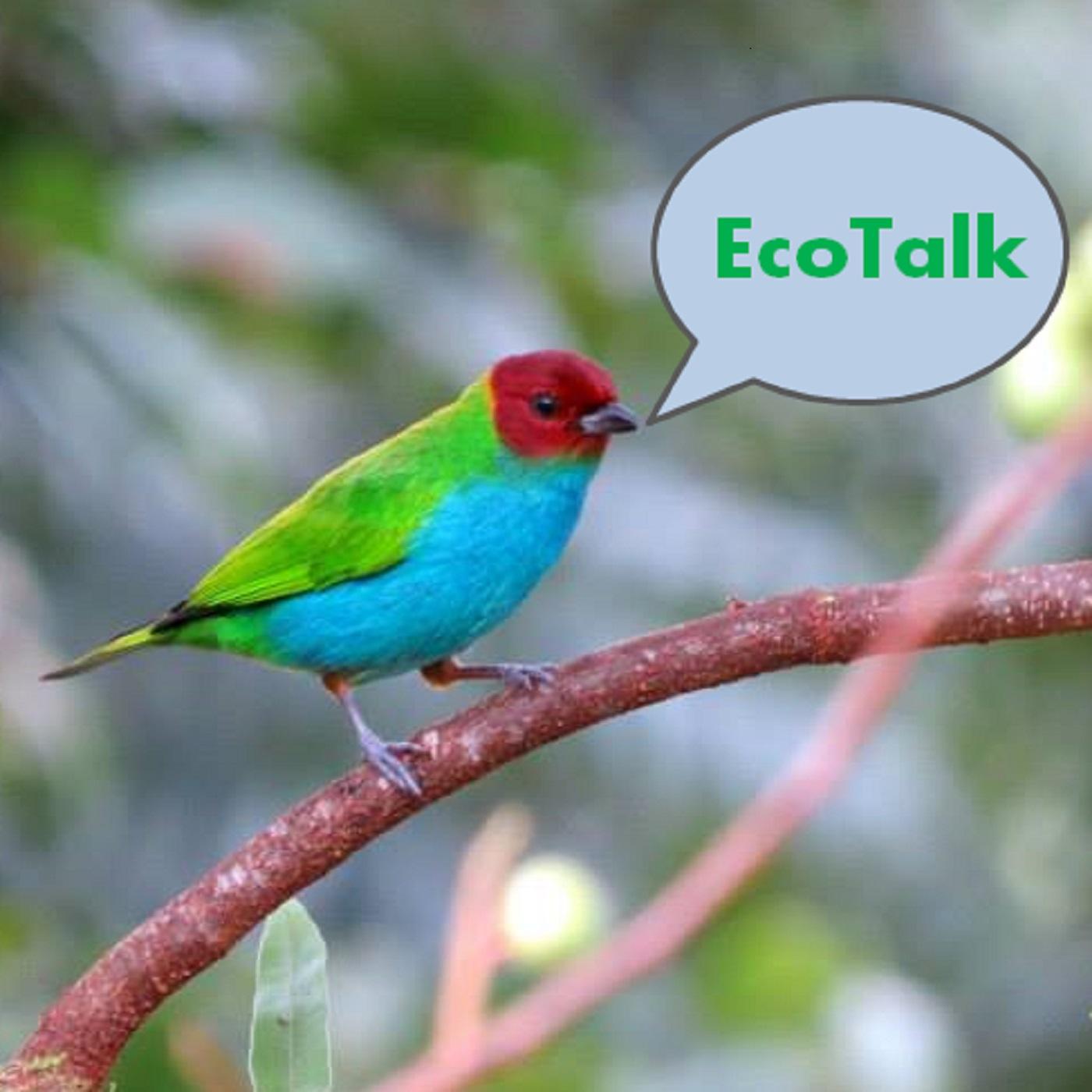 EcoTalk logo