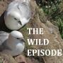 Artwork for Northern Fulmar : The Foul Gull of St Kilda
