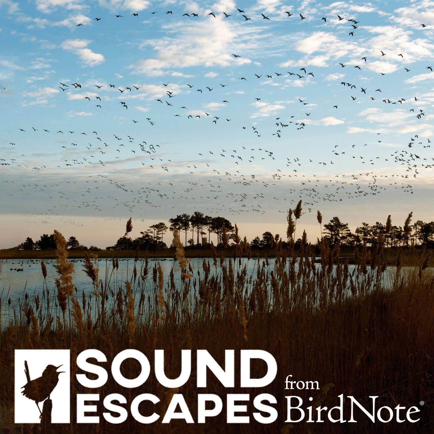 Sound Escapes show art