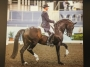 Artwork for 253: Brett Parbery LC - Frame Control, Feet Control and Transition/ Pace Control for the Dressage Horse