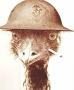 Artwork for BONUS: Bat Minute Returns - Minute 39 Outtake: The Great Emu War