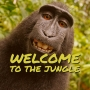 Artwork for Welcome to the Jungle