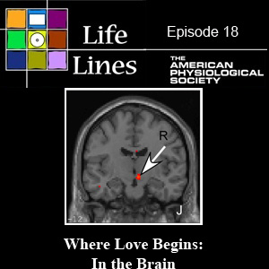 Episode 18: Where Love Begins: In the Brain