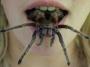 Artwork for Positively Scary Arachnid 2 - or PSA 2
