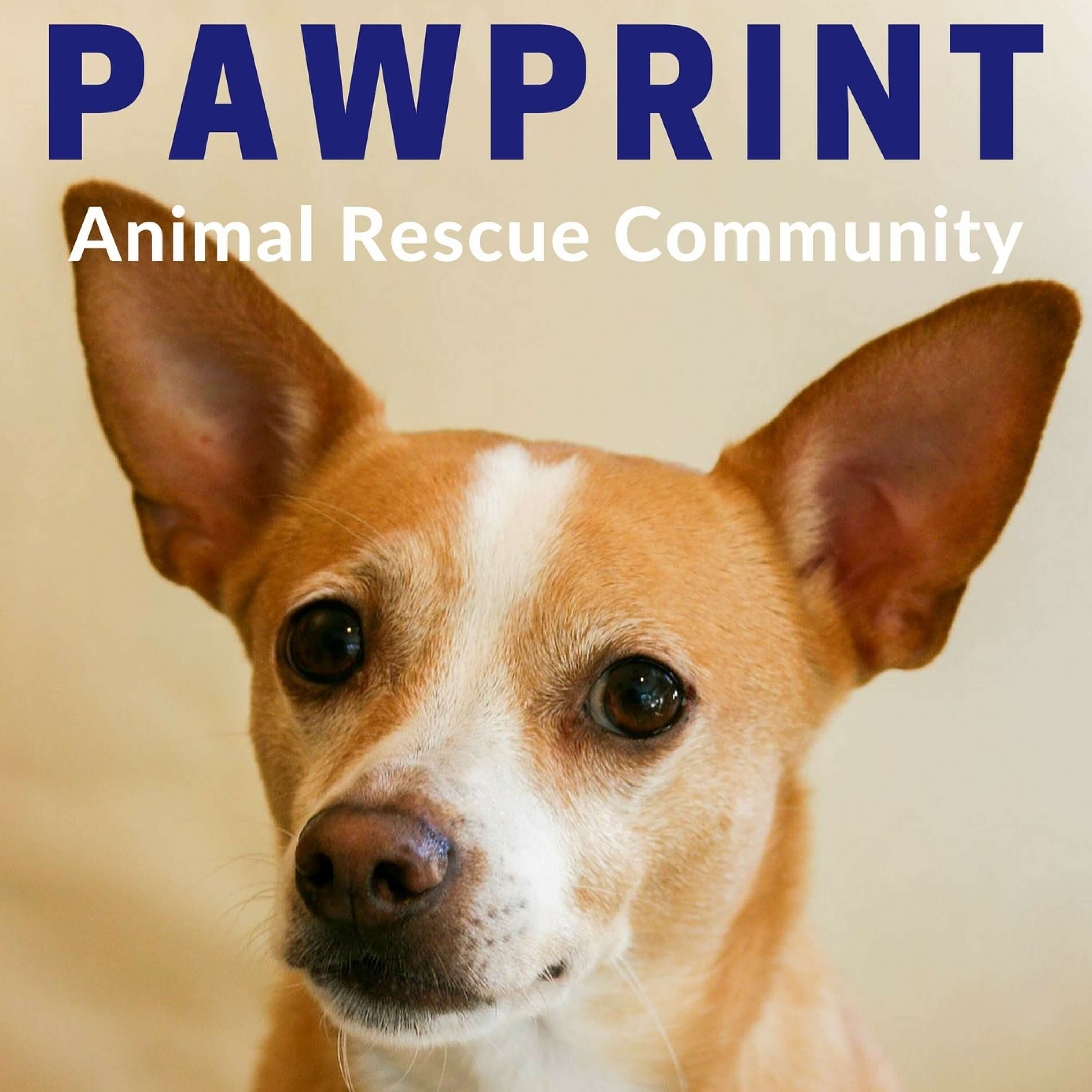 Pawprint | animal rescue podcast for dog, cat, and other animal lovers show art