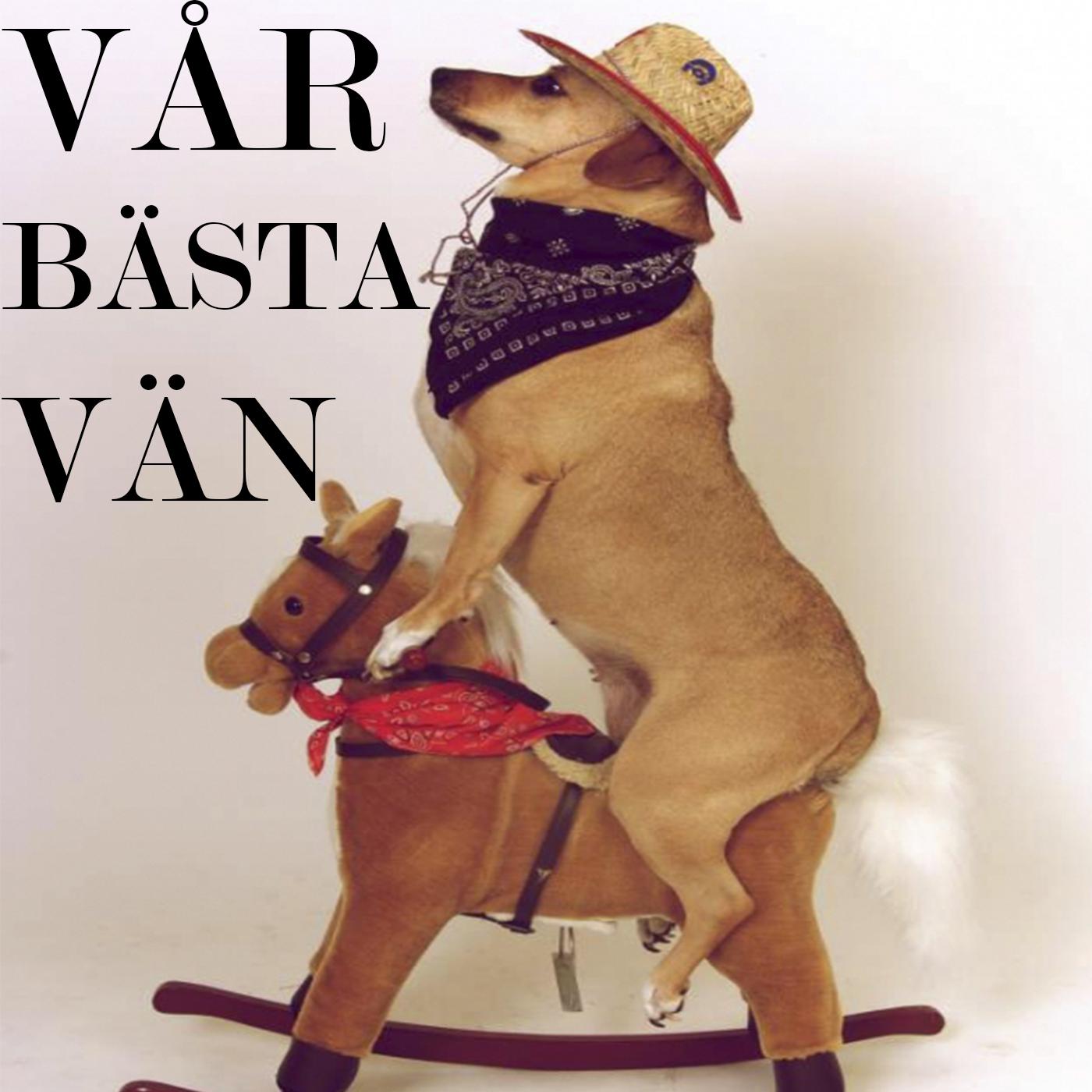Tyst kommunikation och att lägga sig andras hunduppfostran! Med Eva Bodfäldt och hundpanelen