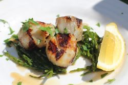 Recipes of the week: Grill-Seared Scallops and Grilled Pacific Snapper with Fresh Tomato Basil Sauce