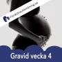 Artwork for Gravid vecka 4 - graviditetskalender