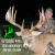 416 Todd Anderson's Dream Season! show art