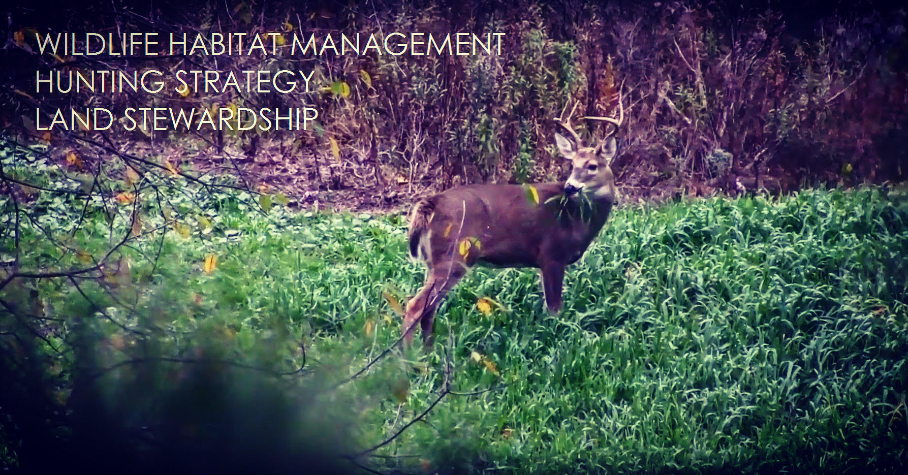 Habitat Podcast #58 - Arron, Jared & Brian - Last Minute Food Plots, How To Save Plots w/ Cereal Grains,  Hunting Waterways, Clover in Shade, Different Failed Scenarios, Backup Plans, Tips & Tricks & Fall Hunting Plans show art