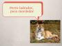 Artwork for DS 15 Perro ladrador, poco mordedor