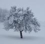 Artwork for 167 Winter -  Reduktion aufs Wesentliche