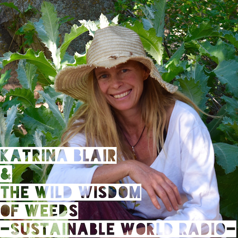 The Wild Wisdom of Weeds with Katrina Blair