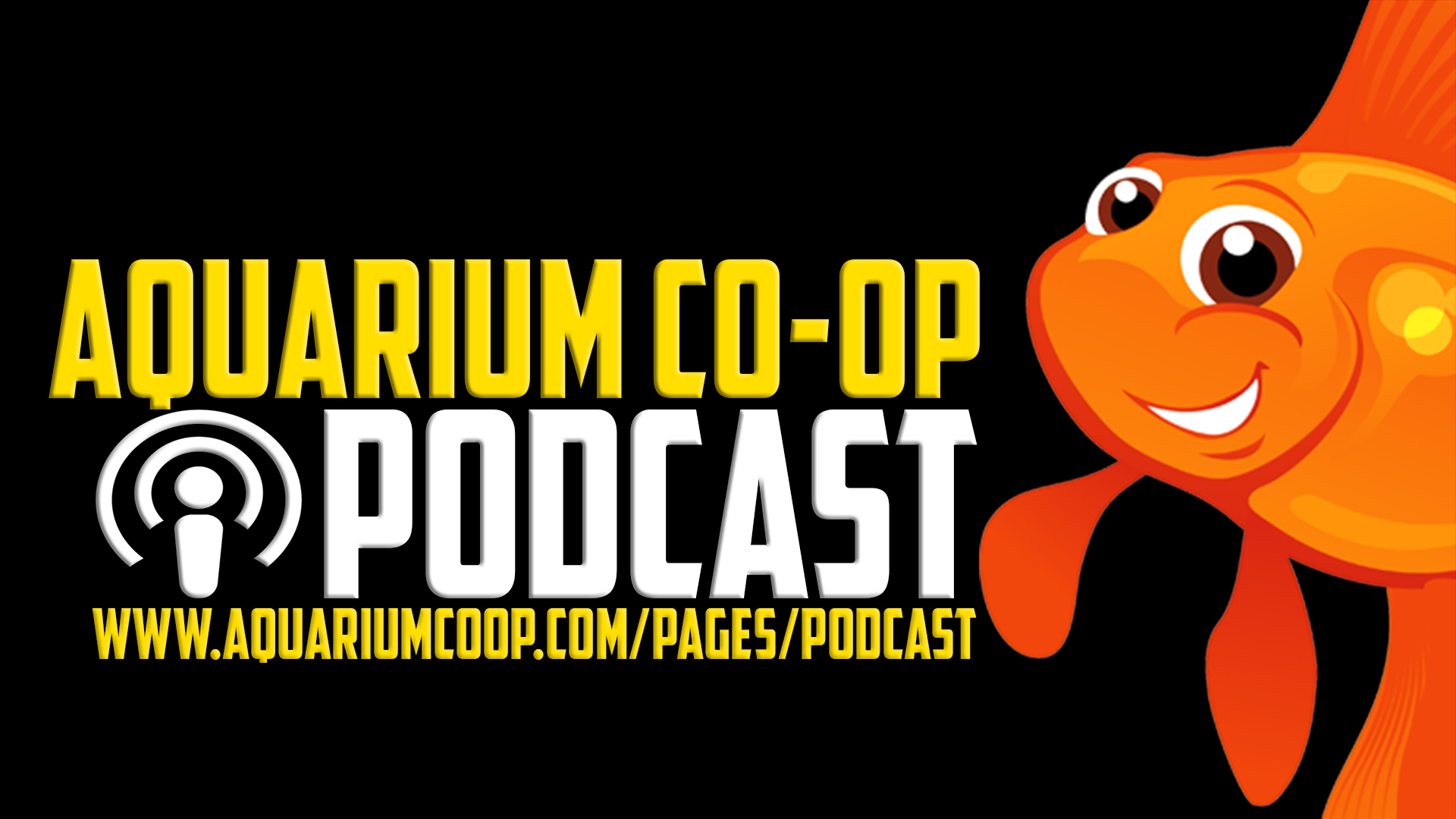 Real Fish Talk by Aquarium Co-Op: Don't Miss These Signs in your Fish Tank!