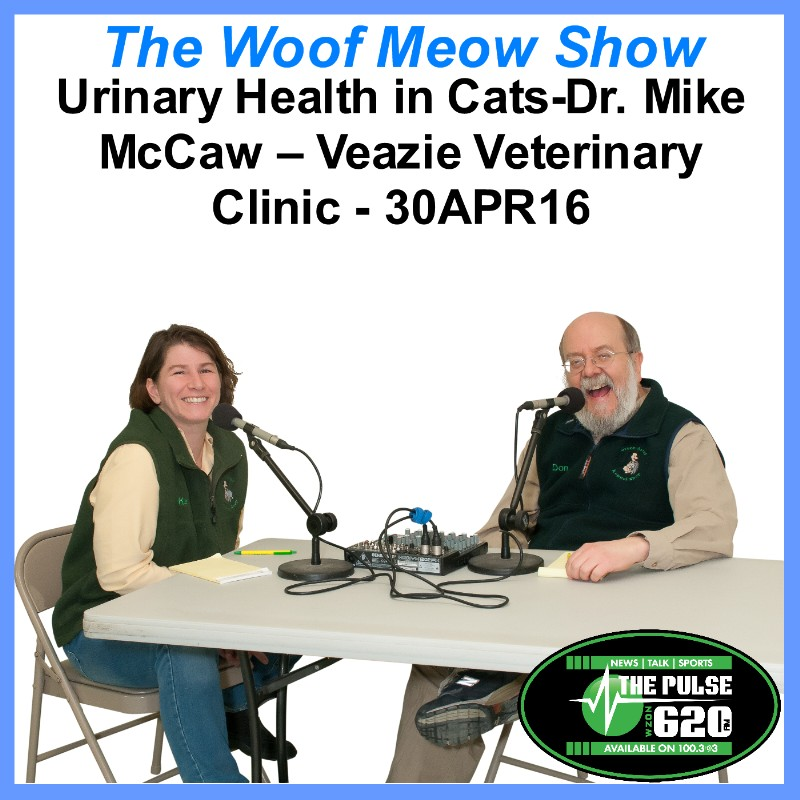Urinary Health in Cats-Dr. Mike McCaw - Veazie Veterinary Clinic