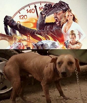 Death Race: Sickly Dog