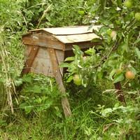 The Barefoot Beekeeper - Episode 2
