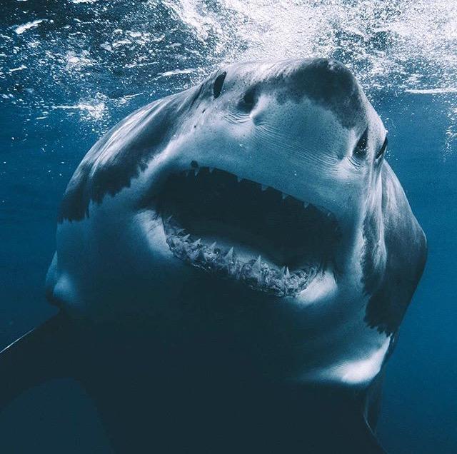 #291:Dean Karr/Euan Rannachan/SHARK SHARK SHARK