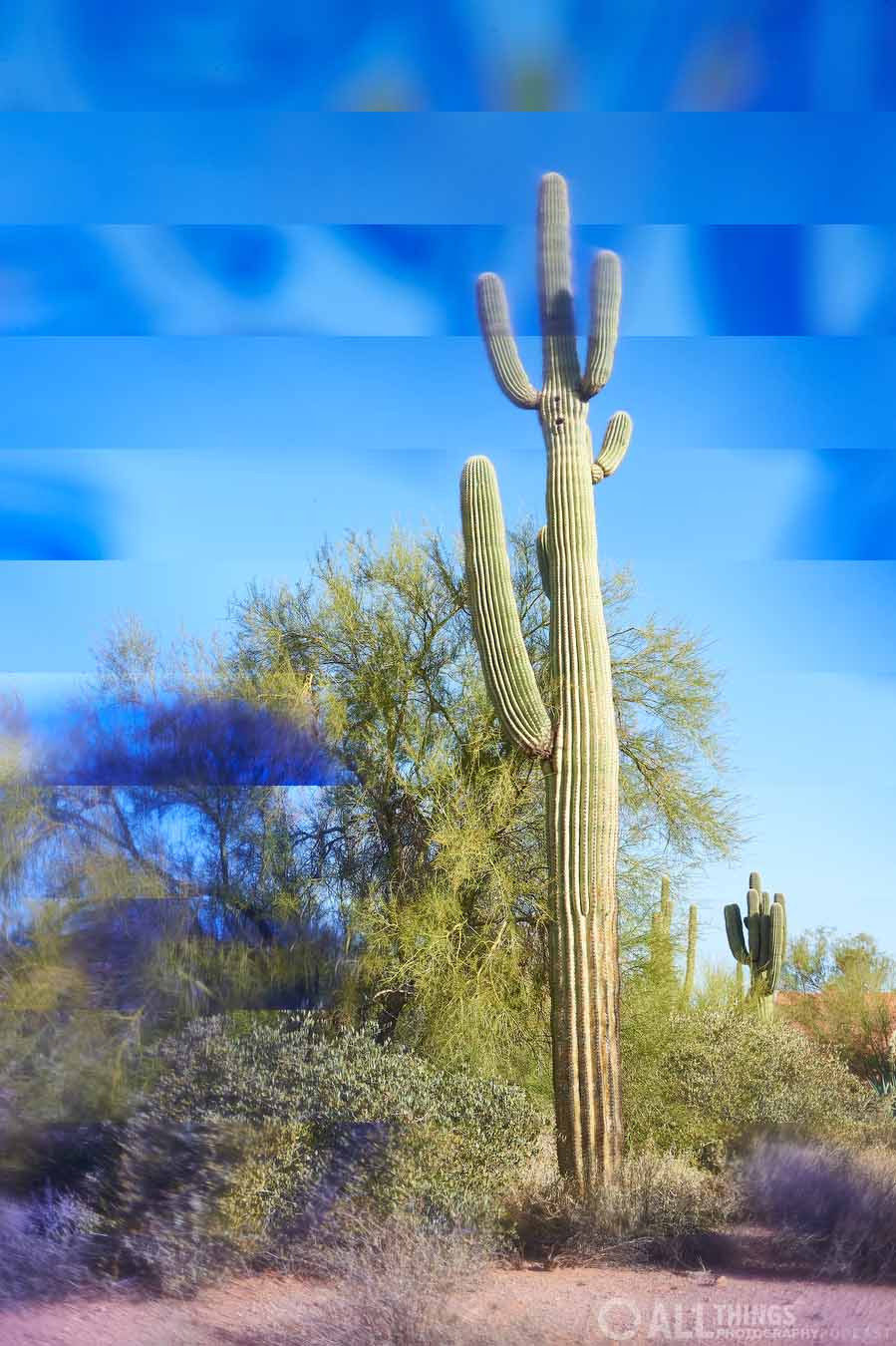 saguaro marketed 2