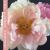 Floral Educator and Legend, Phil Rulloda show art