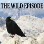 Artwork for Alpine Chough : The Black Feather of the Neanderthals