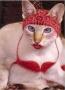 Artwork for CST #300: Skanky Cat