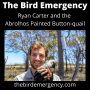 Artwork for 050 The Abrolhos Painted Buttonquail with Ryan Carter