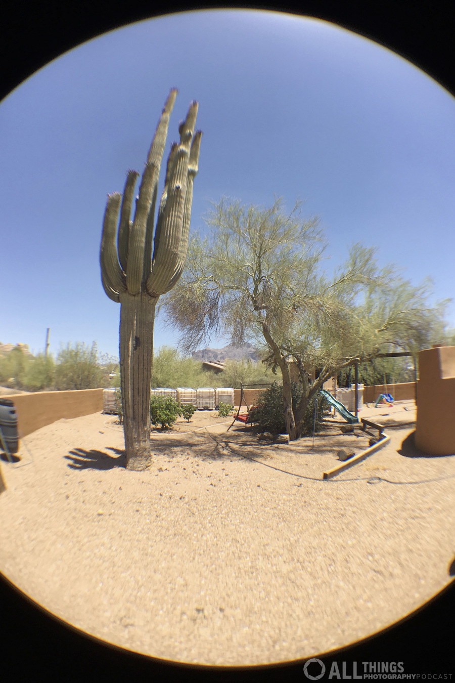 saguaro fish eye