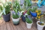 Artwork for 3 Important Ways to Properly Space Your Containers - DIY Garden Minute Ep.195