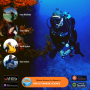 Artwork for NSP:127 Marine Science for Spearfishing