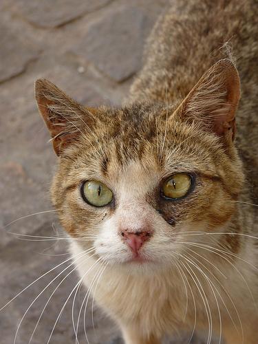 353 Chilepodcast   - Cuento: Un Gato en la Biblioteca