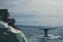 Artwork for Episode 114 - No Moby Dicks