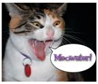 Artwork for Episode 30.5 - Bonus Episode - The Naming Of Cats