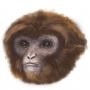 Artwork for De primates y simios, con Sergio Almécija