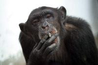 Fumar: Conversacion en ingles