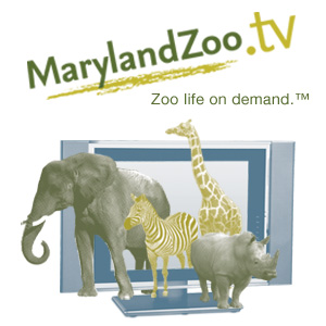 0010 - MarylandZoo.TV - A Day in the Life of an Animal Keeper #1
