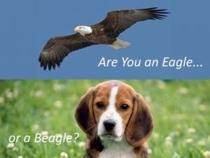 Are You an Eagle or a Beagle?